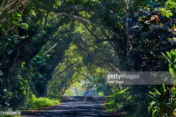 tree tunnel on the kalapana-kapoho road,big island,hawaii.usa - category:census-designated_places_in_honolulu_county,_hawaii stock pictures, royalty-free photos & images