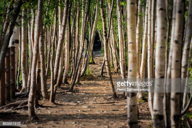 tree tunnel - biei town stock pictures, royalty-free photos & images