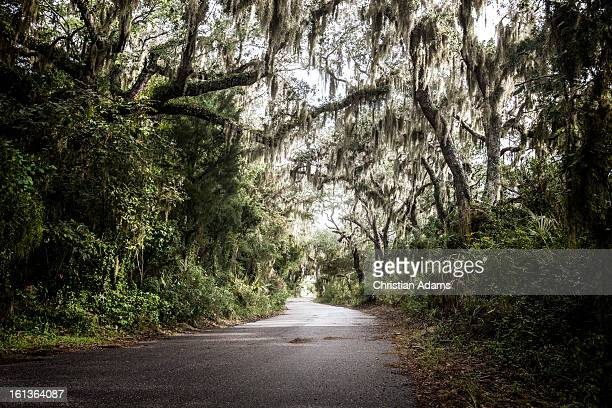 tree tunnel with spanish moss - jacksonville florida stock pictures, royalty-free photos & images