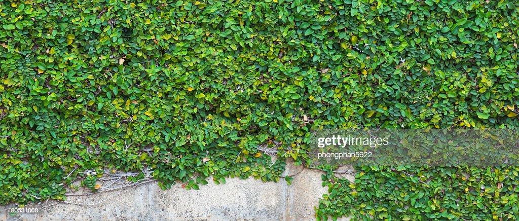 Baum-Wand : Stock-Foto