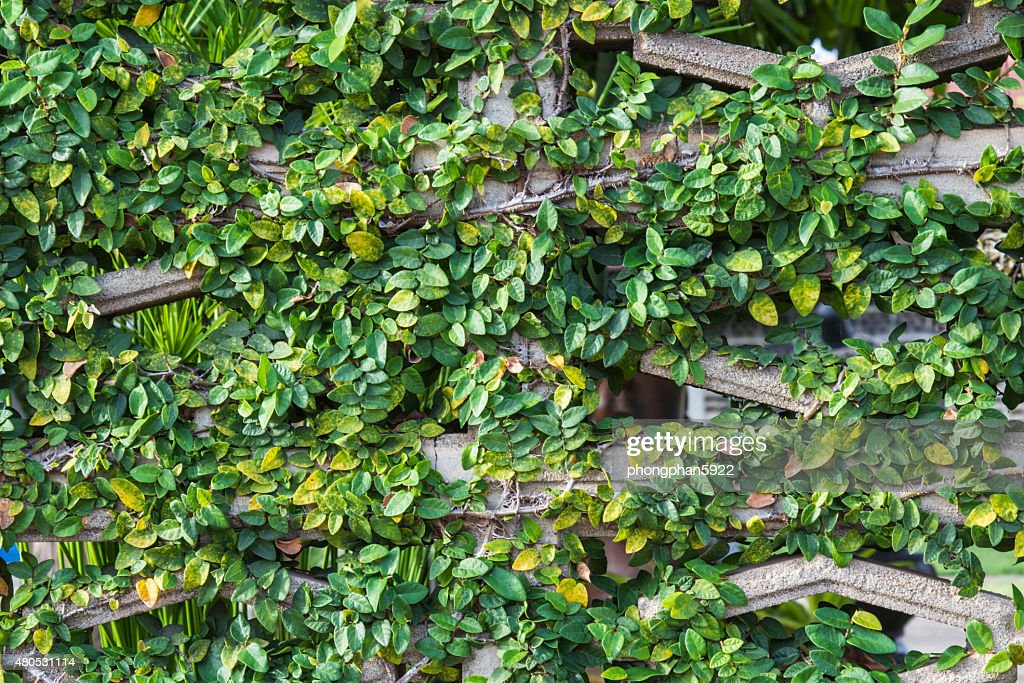 Tree wall : Stock Photo