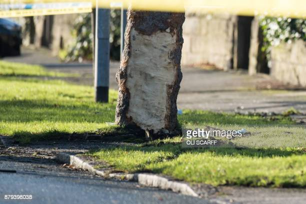 A tree with bark removed stands at the site of a car crash in which five people including three children were killed after a stolen car crashed into...