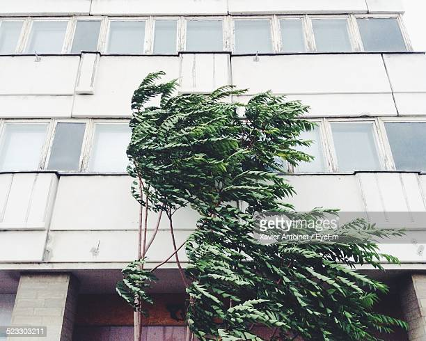 Tree With Building In The Background