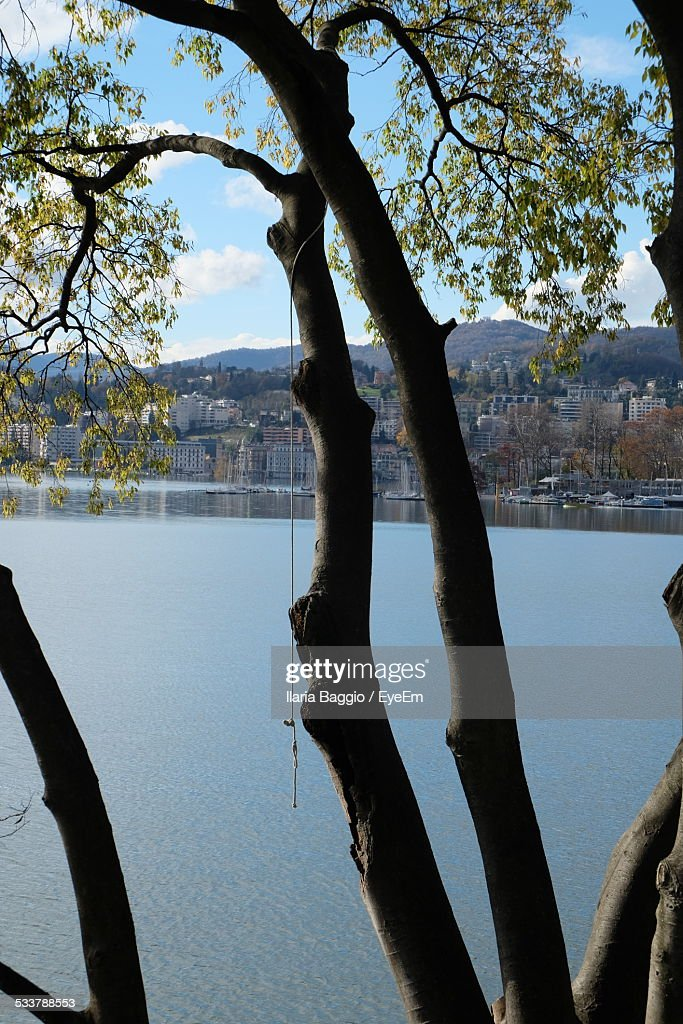Tree With Canal And City In Background : Foto stock
