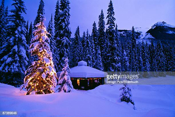 Tree with Christmas lights, Emerald Lake, Yoho National Park, British Columbia, Canada
