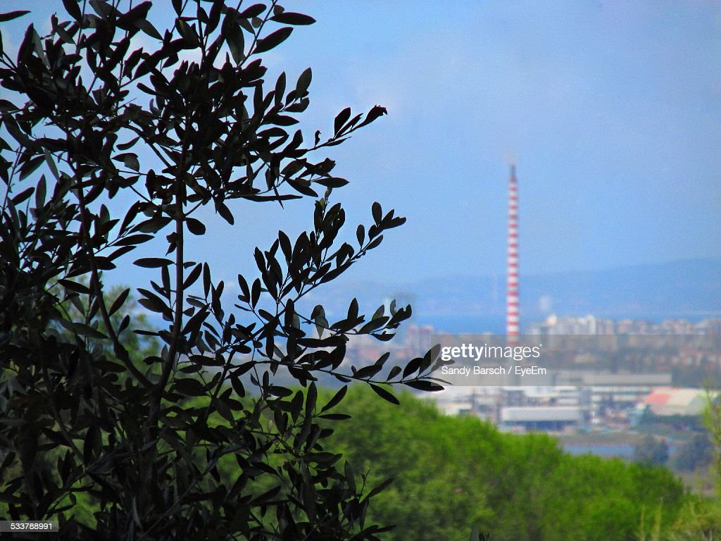 Tree With City In Background : Foto stock