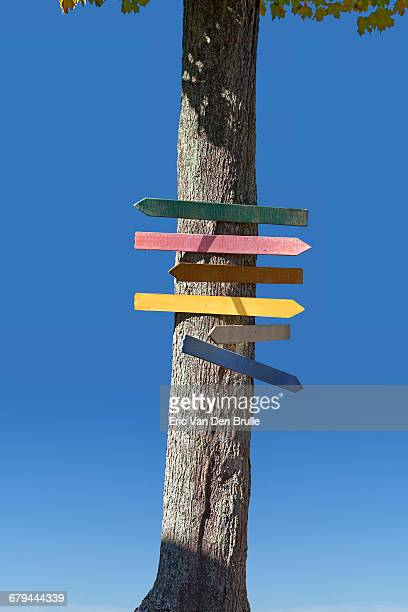tree with direction signs in different colors - eric van den brulle - fotografias e filmes do acervo