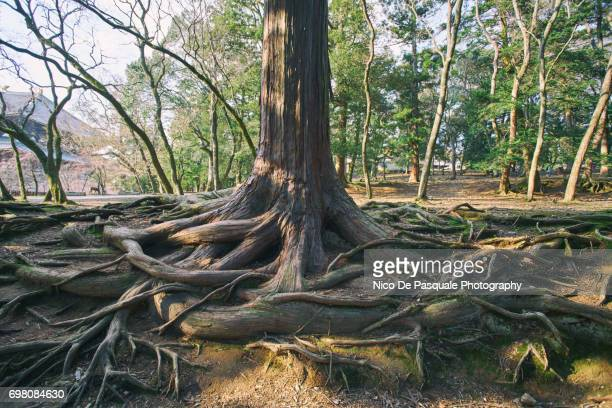 Tree With Overgrown Roots