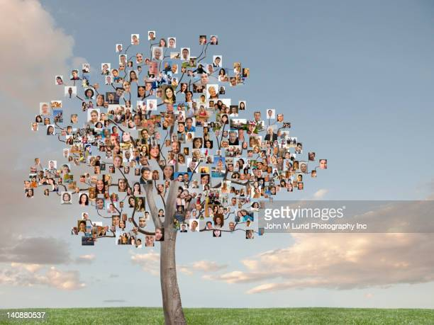 Tree with photographs as leaves