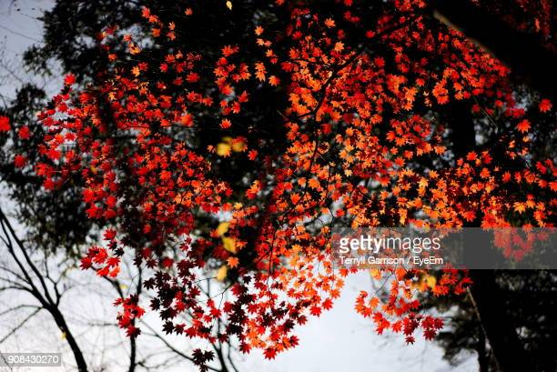 Tree With Red Blossom