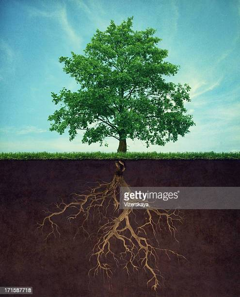 tree with root - underground stock photos and pictures