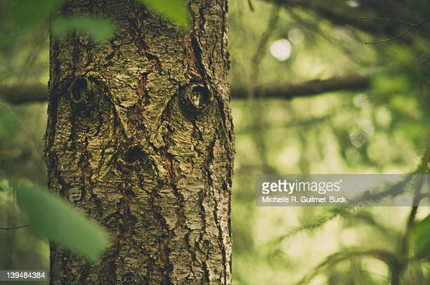 tree with spooky face - pareidolia stock pictures, royalty-free photos & images