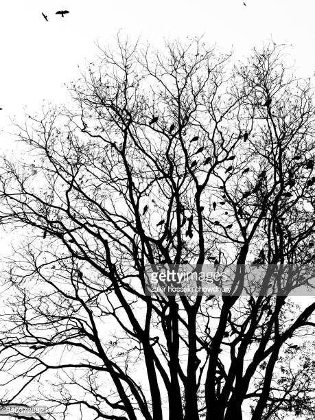 tree without leaf