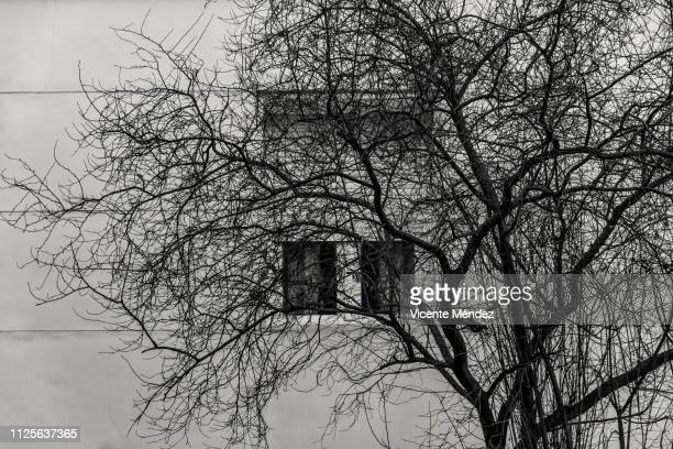 Tree without leaves and window