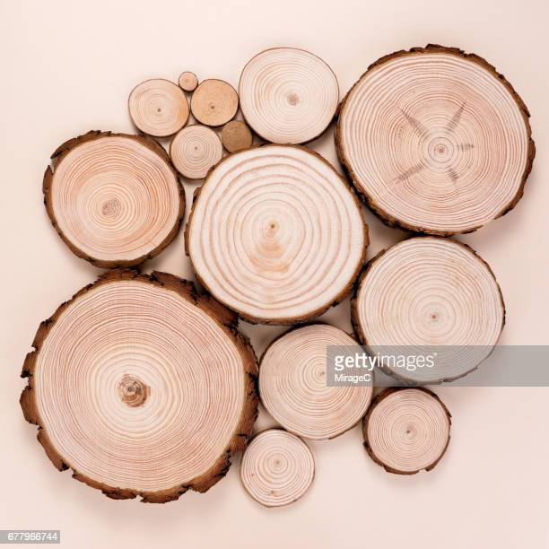 Tree Wood Log Slices