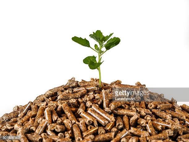Tree wood-pellet biomass