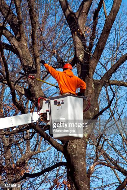 Tree Worker (Arborist) Pruning Branches with Chainsaw Pole Pruner