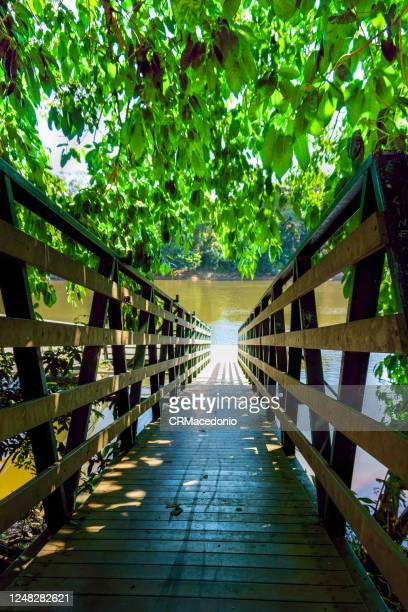 tree-covered pier for access to the river on a sunny day. - crmacedonio stock pictures, royalty-free photos & images