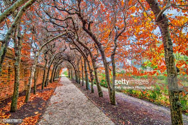 tree-covered walkway in autumn - colonial williamsburg, virginia usa - williamsburg virginia stock pictures, royalty-free photos & images