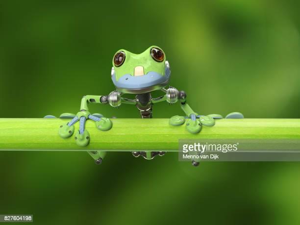 rana arbórea en una rama