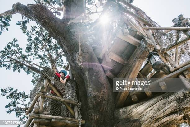 treehouse - peter lourenco stock pictures, royalty-free photos & images