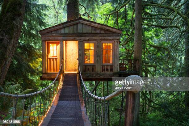 treehouse - tree house stock pictures, royalty-free photos & images