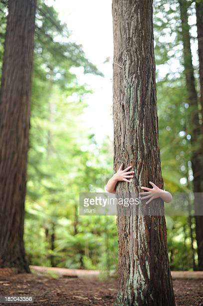 treehugger - tree hugging stock pictures, royalty-free photos & images