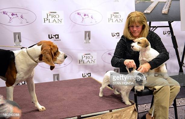 A Treeing Walker Coonhound takes a look at Russell Terriers Pepper and Madison held by owner Sue Sobel during a press conference January 28 2013 by...