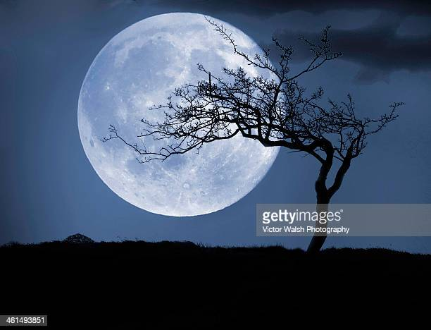 treelight - pleine lune photos et images de collection