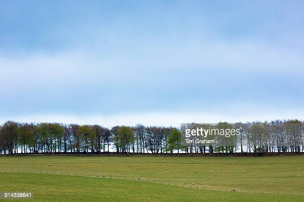 Treeline in Devon, UK