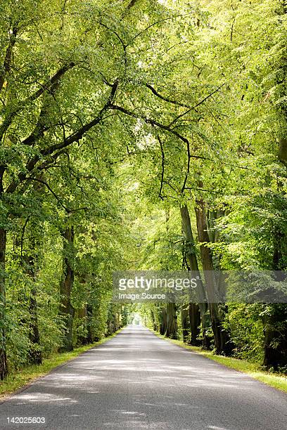 Treelined avenue, Poland