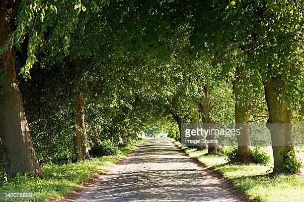 Von Bäumen gesäumt avenue, Rügen, Deutschland