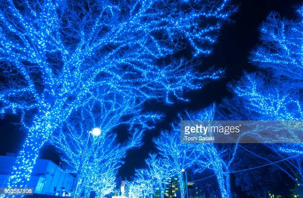 Tree-lined Blue Cave (Ao No Dokutsu) Keyaki Namiki (Zelkova tree–lined) stands in the night along both side of the path, which are illuminated by million of blue LED lights at Yoyogi Park Shibuya Tokyo Japan on 11 December 2017.