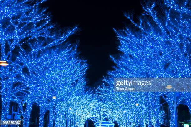 Tree-lined Blue Cave (Ao No Dokutsu) Keyaki Namiki (Zelkova tree–lined) stands in the night along both side of the path, which are illuminated by million of blue LED lights at Yoyogi Park Shibuya Tokyo Japan on 10 December 2017.