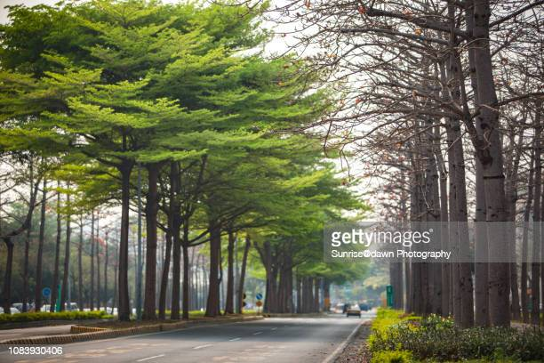 tree-lined boulevard - boulevard stock pictures, royalty-free photos & images
