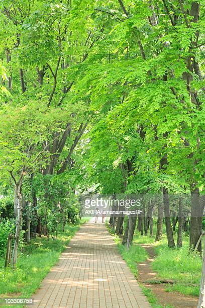Treelined cobblestone path. Tokyo, Japan
