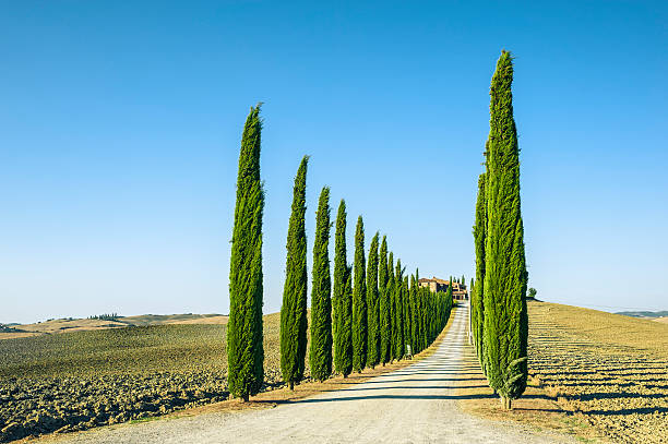 Treelined Country Road In Val D'Orcia Wall Art