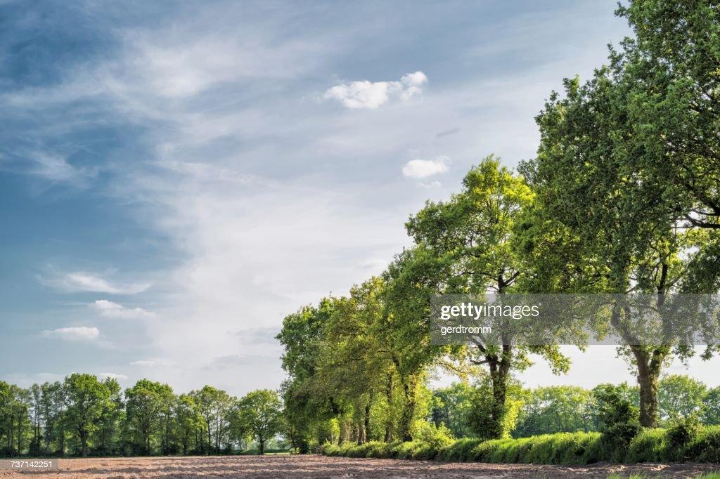 Treelined fields, Ulbargen, Lower Saxony, Germany : Stock Photo