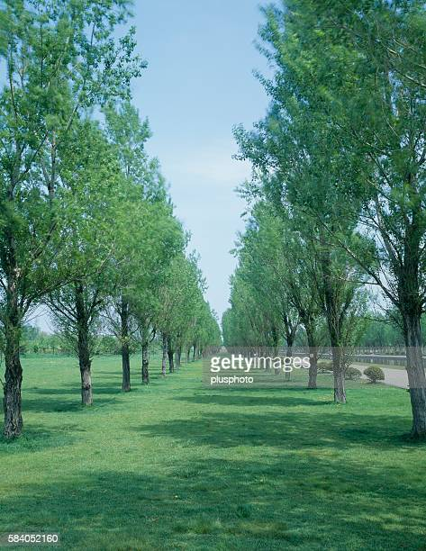 tree-lined park field, sapporo, hokkaido, japan - plusphoto stock pictures, royalty-free photos & images