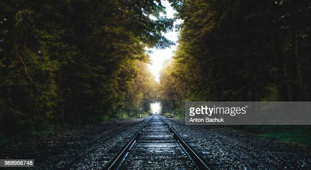 tree-lined railway tracks. - railroad track stock pictures, royalty-free photos & images