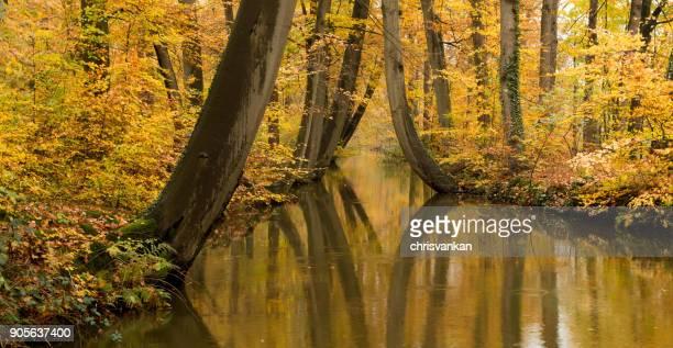 Treelined river in autumn, Delden, Twente, Overijssel, Holland