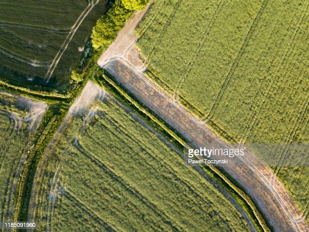treelined road among agricultural fields in east sussex, england, 2018 - sandhurst stock pictures, royalty-free photos & images
