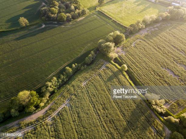 treelined road among agricultural fields in east sussex, england, 2018 - berkshire england stock pictures, royalty-free photos & images