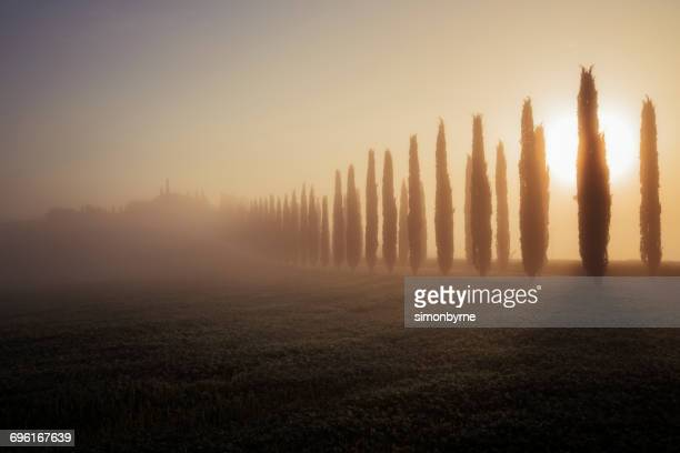 treelined road at sunrise, val d'orcia, siena, tuscany, italy - val d'orcia foto e immagini stock