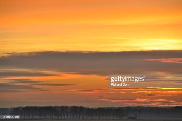 Tree-lined road at sunset, Xanten, Lower Rhine, North Rhine-Westphalia, Germany