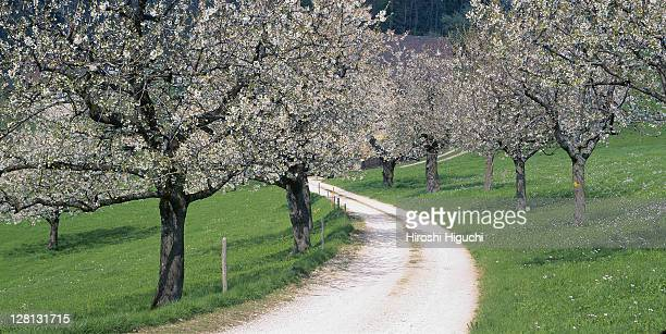 Tree-lined road, Gelterkinden, Canton Baselland, Switzerland