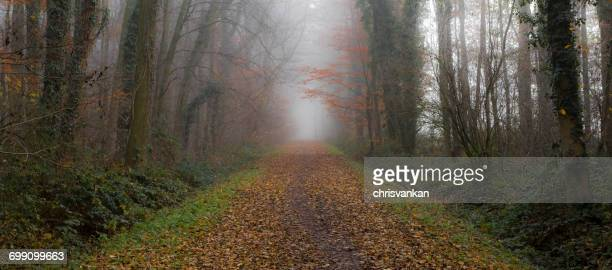 Treelined road in autumn, Overijssel, Twente, Holland