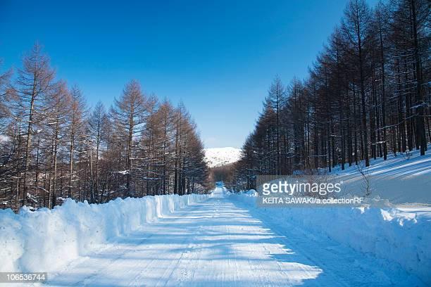 Treelined road in snow, Nagano Prefecture, Honshu, Japan