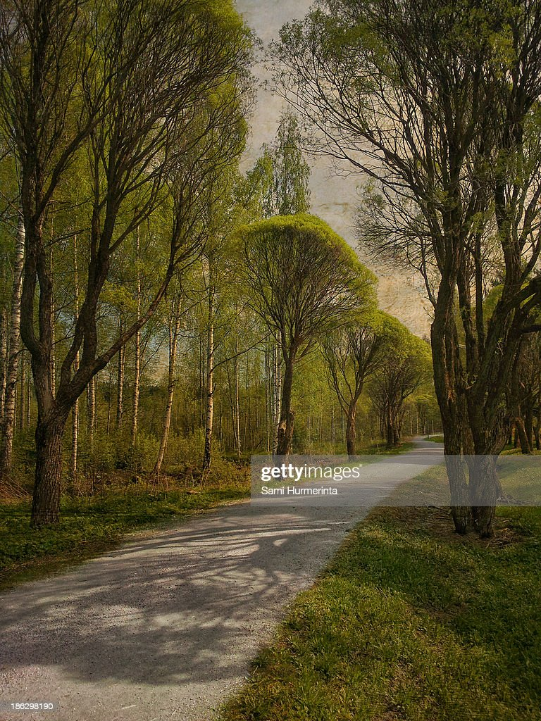 A tree-lined road in spring : Stock Photo