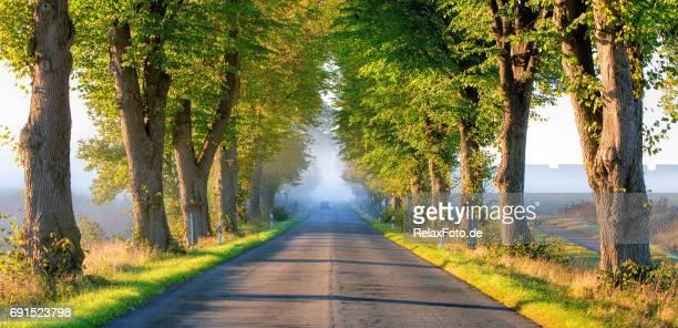 Bäumen gesäumt Straße im Sonnenlicht am nebligen Morgen